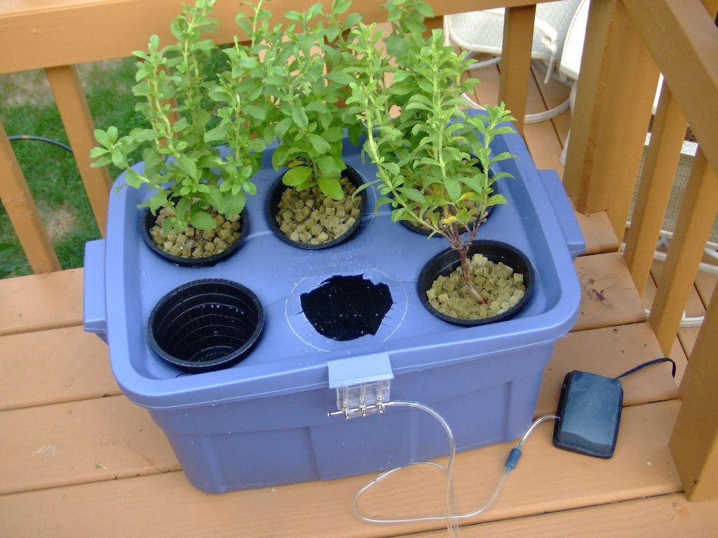 Personalized Small Hydroponic Stevia Garden as an example of Deep Water Culture