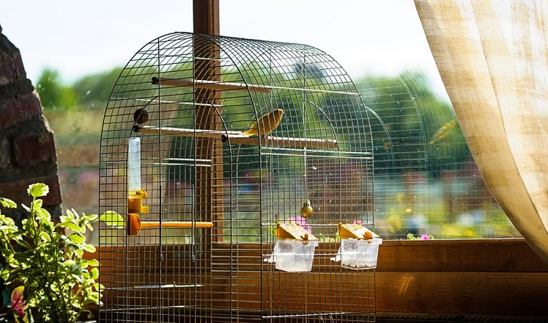 best canary cages