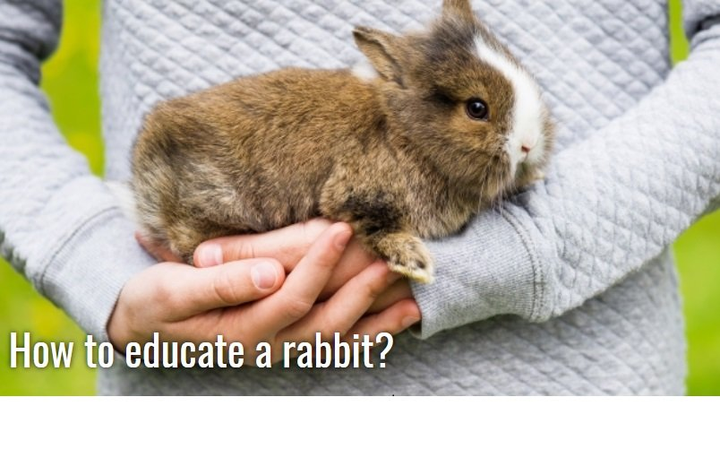 communication with your rabbit