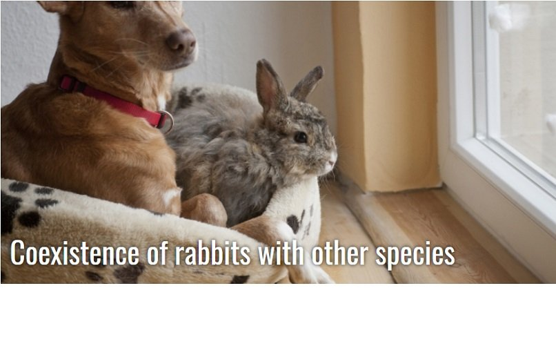 Coexistence of rabbits with other species