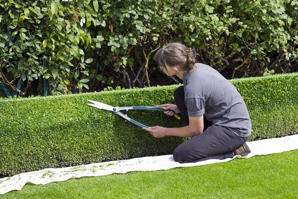 woman trimming the grass