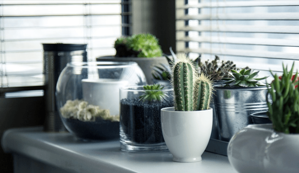 types of cacti and succulents on a table