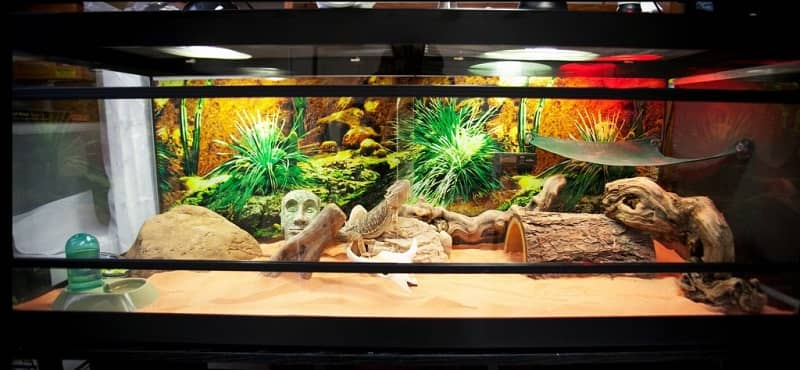 Best Cages for Bearded Dragons